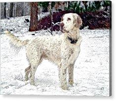 Duke Acrylic Print by James Steele