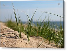 Dune Acrylic Print by Holger Ostwald