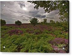 Dunwich Heath Acrylic Print by Darren Burroughs