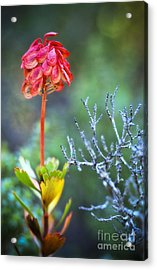 Dying Rocket Acrylic Print by David Lade