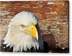 Eagle On Brick Acrylic Print by Marty Koch