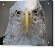 Eagle Acrylic Print by Paulette Thomas
