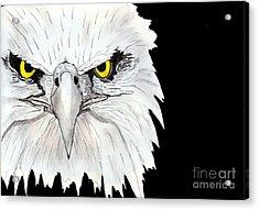 Eagle Acrylic Print by Shashi Kumar