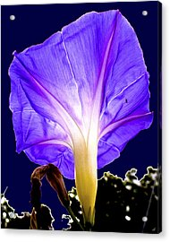 Early Morning Glory Acrylic Print by Roy Foos