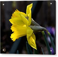Early Spring Acrylic Print by Michael Friedman