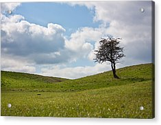 Early Spring Acrylic Print by Semmick Photo