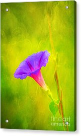 Early To Rise Acrylic Print by Darren Fisher