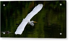 Egret And Gator Acrylic Print by Andres Leon