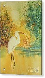 Egret Acrylic Print by Diana  Tyson