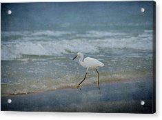 Egret Acrylic Print by Sandy Keeton