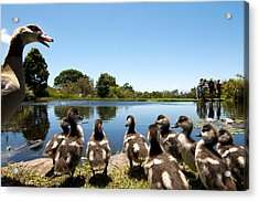 Egyptian Geese Acrylic Print by Fabrizio Troiani