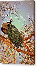 Elegance Acrylic Print by Diane montana Jansson