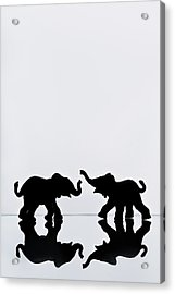 Elephant Pair Reflection Acrylic Print by Chris Knorr