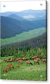 Elk Highlands Acrylic Print by Robert Meyers-Lussier