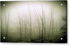 Emerson Bog At Dawn Acrylic Print by Mike Greco