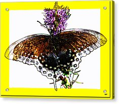 Enchanted Wings Card Acrylic Print by Debra     Vatalaro