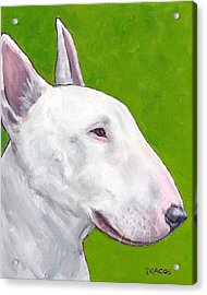 English Bull Terrier Profile On Green Acrylic Print by Dottie Dracos