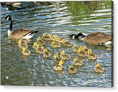 Enouth With The Fertility Pills Acrylic Print by Frank Townsley