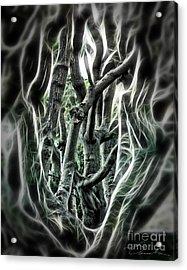 Entangled Worlds Acrylic Print by Danuta Bennett