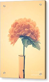 Estillo - 01i2 Acrylic Print by Variance Collections