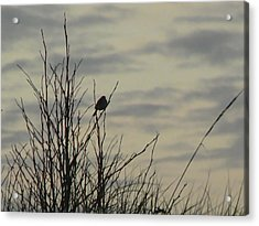 Evening Song Acrylic Print by Pamela Patch