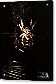 Evil Charlotte Acrylic Print by Jayme X