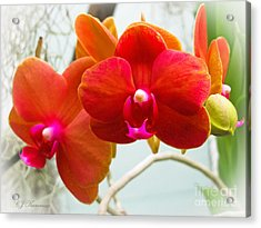 Exotic Orchids Acrylic Print by Colleen Kammerer
