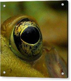 Eye Of Frog Acrylic Print by Paul Ward
