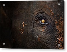 Eye Of Thai Elephant Acrylic Print by presented by Zolashine