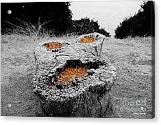 Faces In Nature Acrylic Print by Cheryl Young