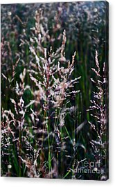 Faces In The Field Grass Acrylic Print by Wesley Hahn