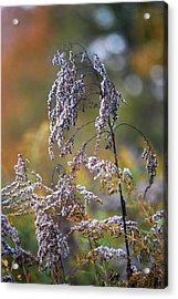 Fading Color Acrylic Print by Kimberly Deverell