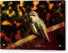 Fall Colors - Allens Hummingbird Acrylic Print by James Ahn