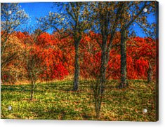 Fall Foliage Acrylic Print by Ronald T Williams