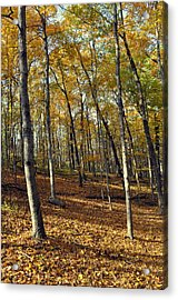 Fall In The Forest 1 Acrylic Print by Marty Koch