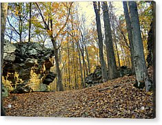 Fall In The Forest 3 Acrylic Print by Marty Koch