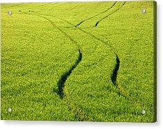 Farm Tracks Acrylic Print by Mike  Dawson