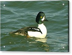 Feeling Ducky  Acrylic Print by Jeff Swan
