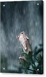 Feels Like The First Time Acrylic Print by Laurie Search