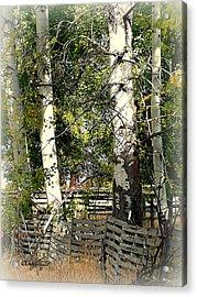 Fenced Aspen Acrylic Print by Cindy Wright