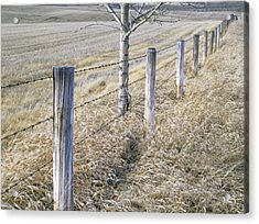 Fenceline And Cropland In Late Fall Acrylic Print by Darwin Wiggett