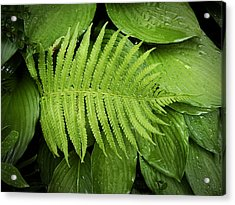 Fern On Top Acrylic Print by Nafets Nuarb