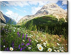 Field Of Daisies And Wild Flowers Acrylic Print by Sandra Cunningham