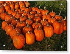 Field Of Pumpkins Acrylic Print by LeeAnn McLaneGoetz McLaneGoetzStudioLLCcom