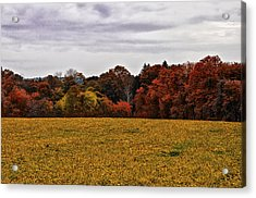 Fields Of Gold Acrylic Print by Bill Cannon