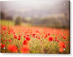Fields Of Wild Poppies Acrylic Print by Olivia Bell Photography