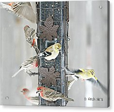 Finches Acrylic Print by Debbie Sikes