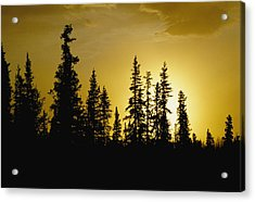 Fir Trees Silhouetted In Early Morning Acrylic Print by George F. Mobley