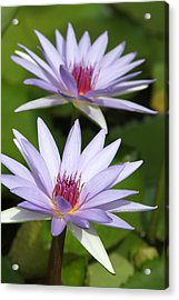 Fire Lilly Acrylic Print by Jose Rodriguez