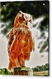 Fire Owl V1 Acrylic Print by Tilly Williams